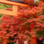 下鴨上川原町・未改修の京町家に「下鴨周辺・紅葉の写真(2019年撮影)」を追加しました。